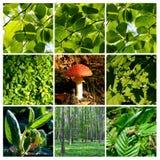 1 лето весны гриба пущи деталей Стоковое Изображение