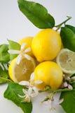 1 лимон стоковая фотография rf