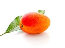 1 манго листьев Стоковая Фотография