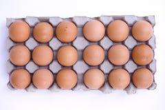 1 мания яичка цыпленка Стоковые Фотографии RF