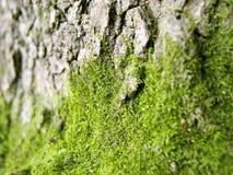 1 мох Стоковые Изображения RF