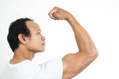 1 мышца ванты Стоковые Изображения