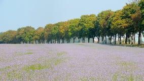1 нет цветка поля Стоковое фото RF