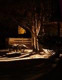 1 ноча светов Стоковое фото RF