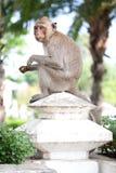 1 обезьяна Стоковые Фото