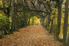 1 осень Стоковая Фотография RF