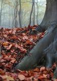 1 осень Стоковое фото RF