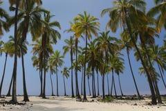 1 пальма оазиса Стоковое Изображение