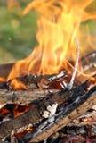 1 пожар Стоковое Фото