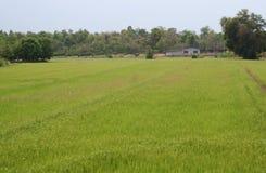 1 поле Стоковая Фотография