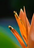 1 рай птицы Стоковые Изображения