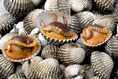 1 раковина моря еды Стоковое Изображение