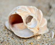 1 раковина моря пляжа Стоковые Изображения