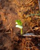 1 растущий вал Стоковое фото RF