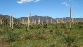 1 регенерация bush Стоковая Фотография