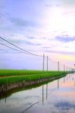 1 серия падиа поля Азии Стоковая Фотография