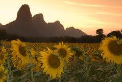 1 солнцецвет сумрака Стоковые Изображения