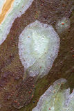 1 ствол дерева лишайников Стоковое Фото