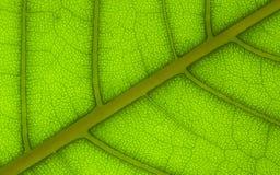 1 структура листьев Стоковое Фото