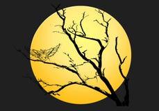 1 сыч halloween предпосылки Стоковое Изображение