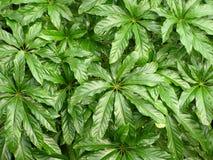 1 текстура листьев джунглей Стоковые Изображения RF