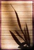 1 тень фарфора Стоковые Фотографии RF