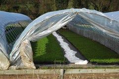 1 тоннель урожая стоковые фото