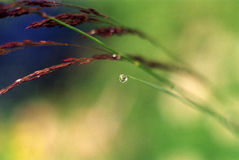 1 трава шарика Стоковые Фотографии RF