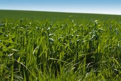 1 трава Стоковое фото RF
