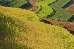 1 фарфор fields terraced Стоковая Фотография