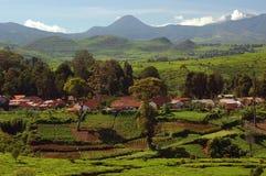 1 чай плантации Стоковые Изображения
