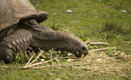 1 черепаха Стоковые Фотографии RF