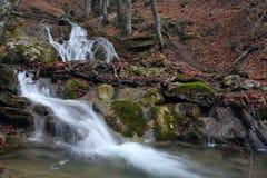 (1) 12 2009 lasowych siklaw Zdjęcie Royalty Free