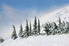 1雪 免版税图库摄影