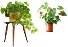 1 2 houseplants Arkivbild