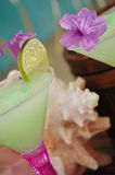 коктеилы 1 тропические Стоковые Изображения RF