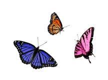 1 3只蝴蝶收集 免版税库存照片