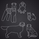 狗不同的品种在线性样式的 第1.部分 免版税库存照片
