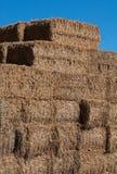 被排序的干草1 图库摄影