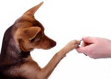 1 собака Стоковое Фото