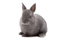 1个兔宝宝 免版税图库摄影