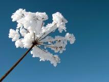 1霜种植丝毫 免版税库存照片