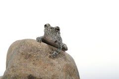 1 żaba Obrazy Royalty Free
