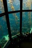 1 akvarium Royaltyfri Fotografi
