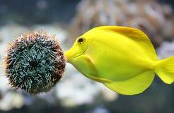 1 akvariumplats Royaltyfria Foton