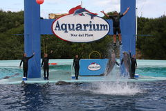 (1) akwarium zdjęcia royalty free