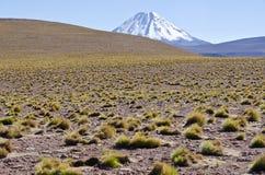 1 altiplano智利miscanti 库存图片