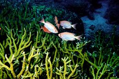 1 andaman мир моря кораллов удивительно Стоковая Фотография RF