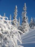 1 arbre de neige Photos libres de droits