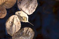 1 automne relâche l'eau de lames Image libre de droits